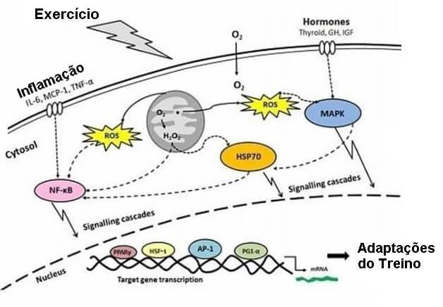 o que é antioxidante? atividade física aumenta sua atividade antioxidante