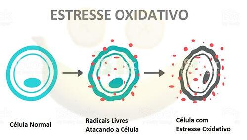 """o que é antioxidante? Quando o número de radicais livres ultrapassa o de antioxidantes, isso nos leva ao que é chamado de """"Estresse Oxidativo""""."""