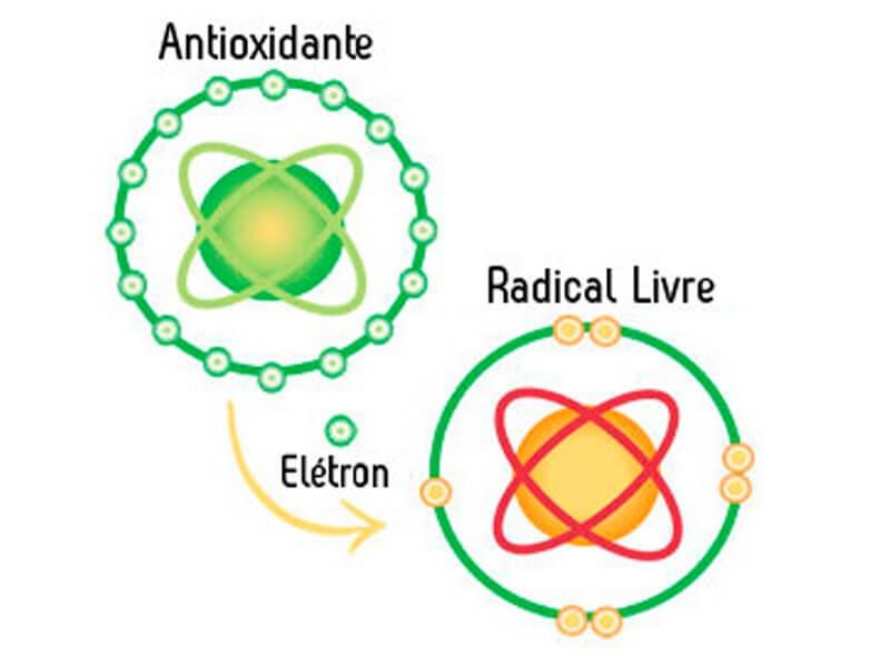 o que é antioxidante? Antioxidantes são moléculas que combatem os radicais livres