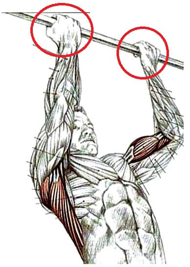 Guia Definitivo Corpo Definido Treinando em Casa 7 BR da Nutrição | Consultoria Fitness Online