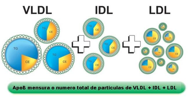 cardarine diminui o LDL colesterol ruim e particulas apoB