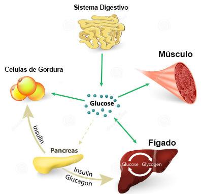 ciclo de carboidratos: para onde vai toda glicose?